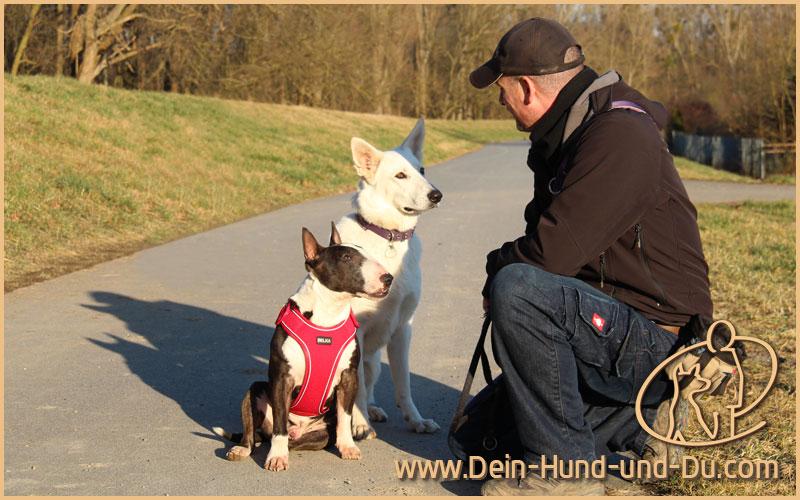 antikonvulsive therapie bei hunden